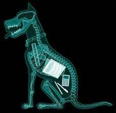 X-ray of dog