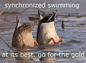 Yearn to swim